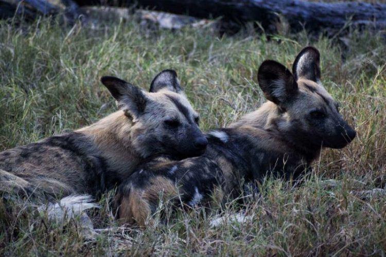 Botswana national parks