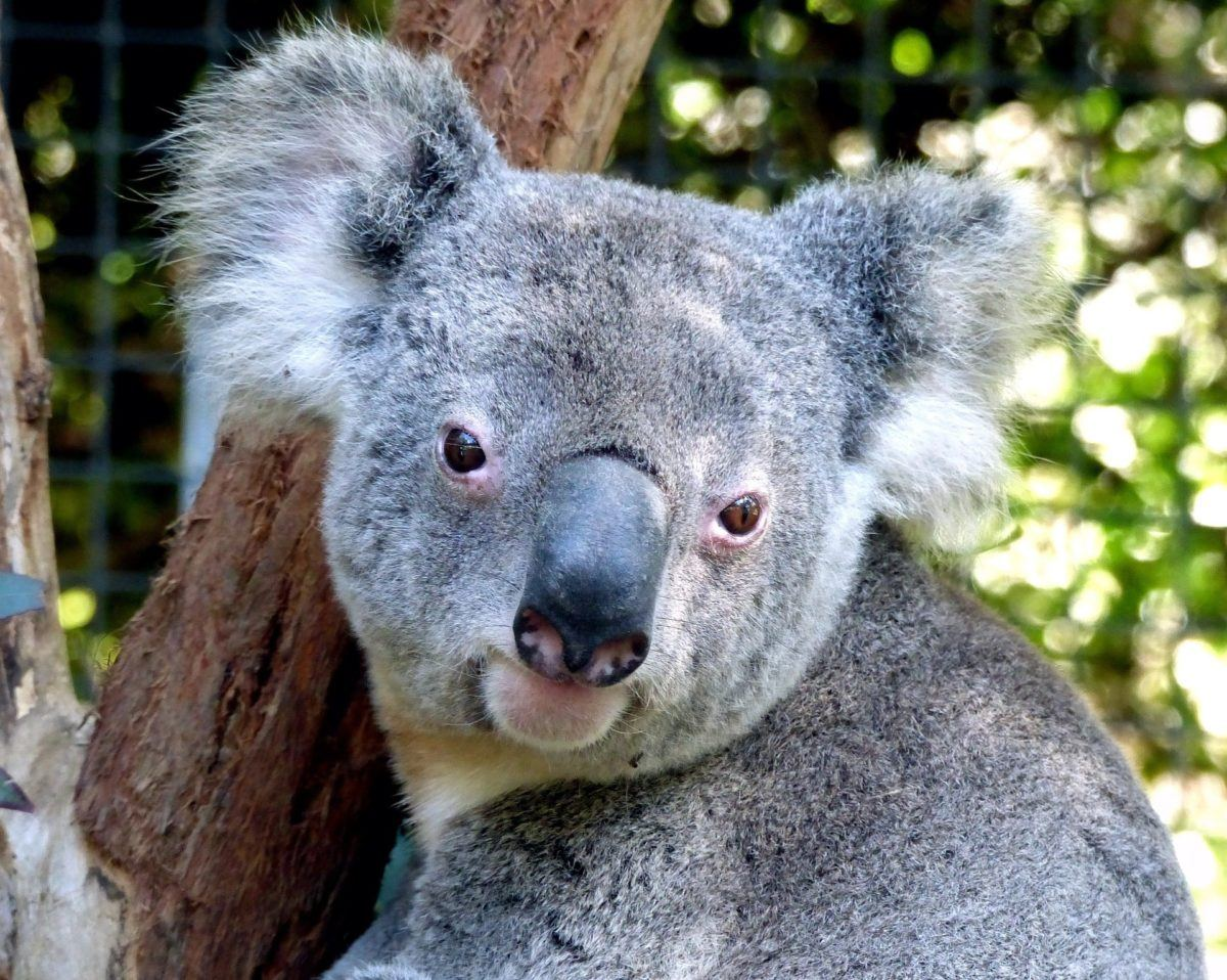 7 Places To See Animals Responsibly In Australia