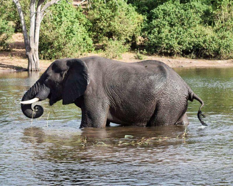 Bronze Qualified Bronze Figur Elefant Massiv Crazy Price Antiquitäten & Kunst