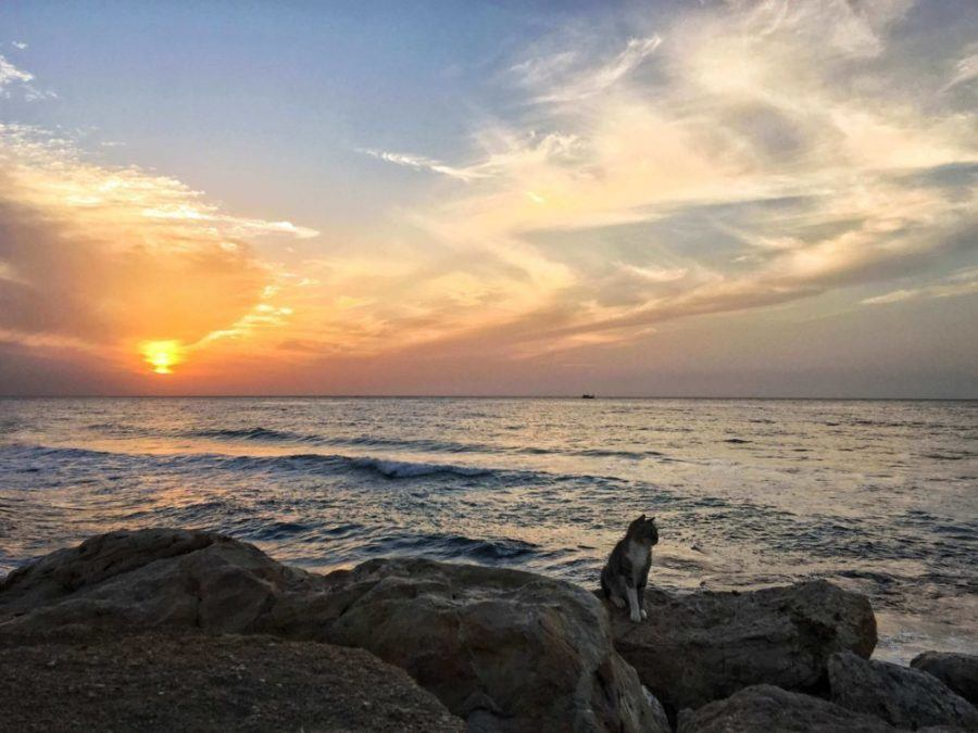 Where To Stay In Tel Aviv: Recommendations By An Almost Local