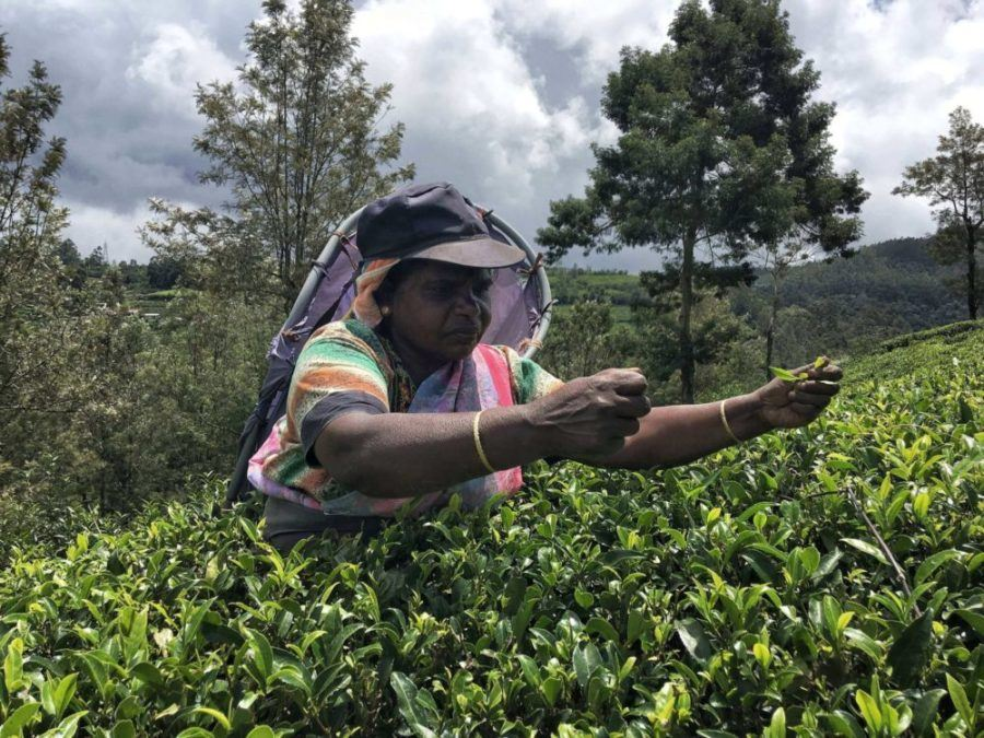 A Complete Guide to Nuwara Eliya, Sri Lanka